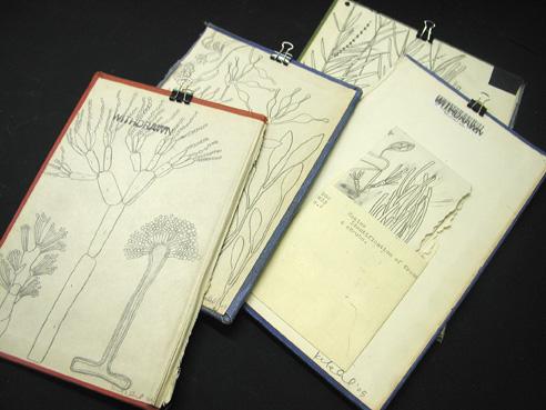Karen Gelardi Making & Identification of Trees and Shrubs 1-4
